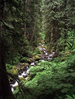Columbia Gorge, 2002, old growth forest