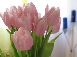 Tulips by photon via Flickr