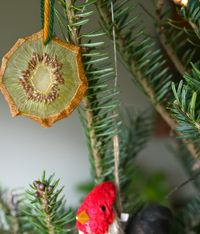Dried kiwi ornament by red bird crafts