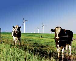 Greenpowercows_3